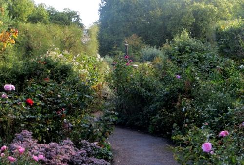 Rosaleda de Hyde Park